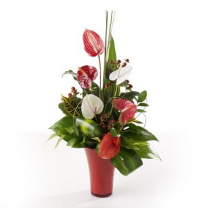 Asymetric Anthuriums