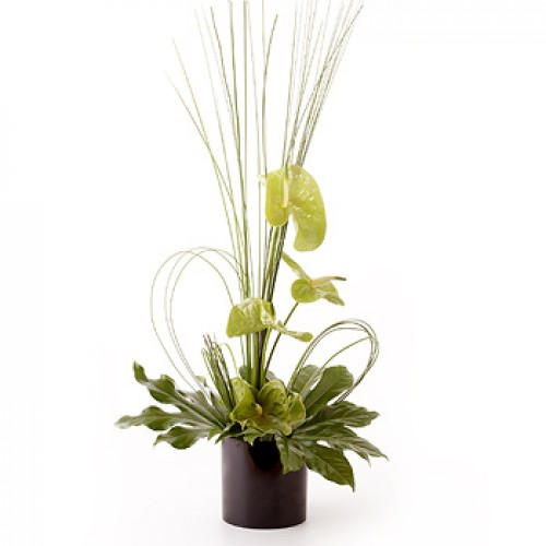 Simply Anthurium - Green