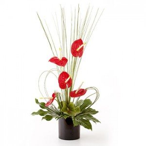 Simply Anthurium - Red