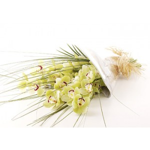 Simply Cymbidium - Green